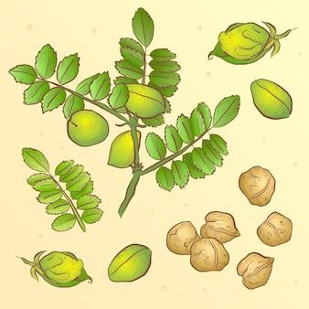 Illustration de pois chiches nutritifs dessinés et de plantes