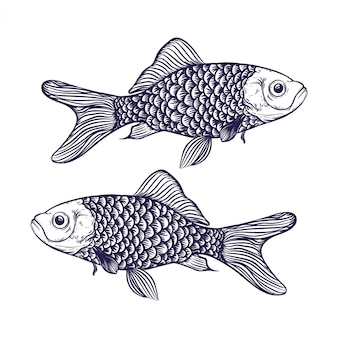 Illustration de poisson dessiné à la main