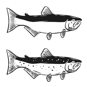Illustration de poisson saumon sur fond blanc. élément pour logo, étiquette, emblème, signe. illustration