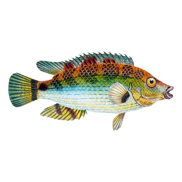 Illustration de poisson vintage