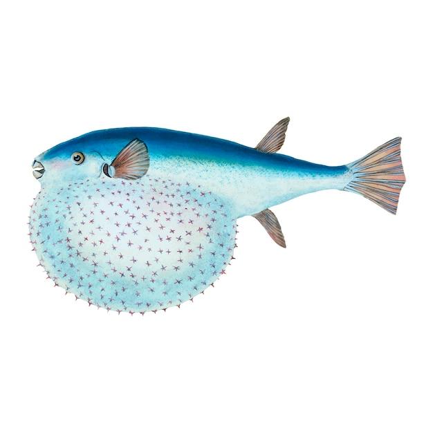 Illustration de poisson vintage