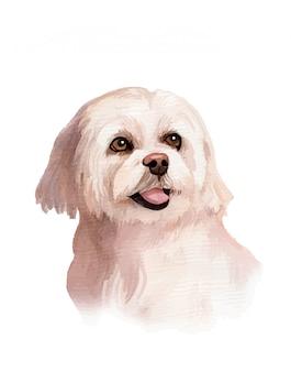 Illustration de portrait de chien maltais aquarelle peinte à la main