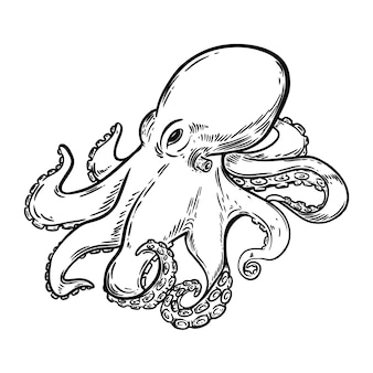 Illustration de poulpe dessiné à la main sur fond blanc. élément pour menu, affiche, emblème, signe. illustration
