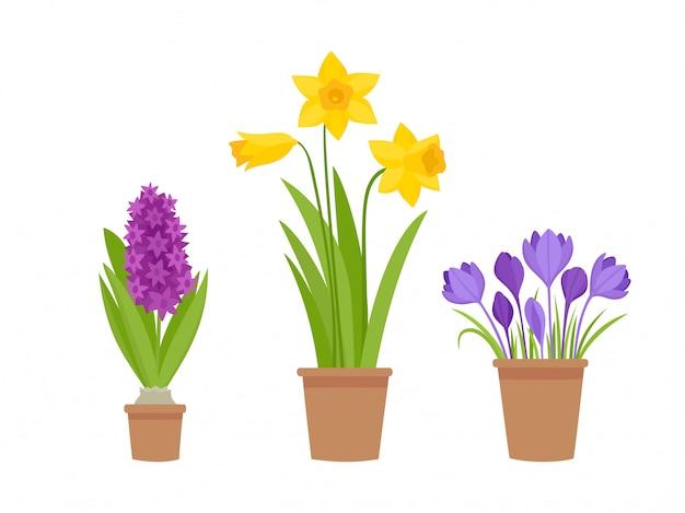 Illustration des premières fleurs du printemps en pot isolé sur blanc.