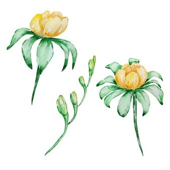 Illustration de printemps aquarelle. branches de fleurs jaunes aquarelles.