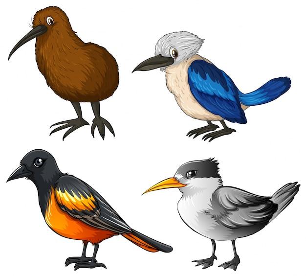 Illustration de quatre types d'oiseaux différents