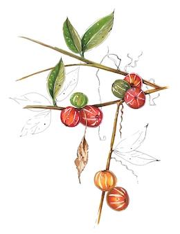 Illustration réaliste de baies d'arbres exotiques dessinés à la main