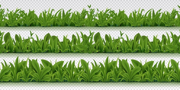 Illustration réaliste de bordure d'herbe transparente