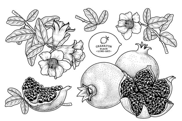 Illustration rétro de fruits de grenade dessinés à la main
