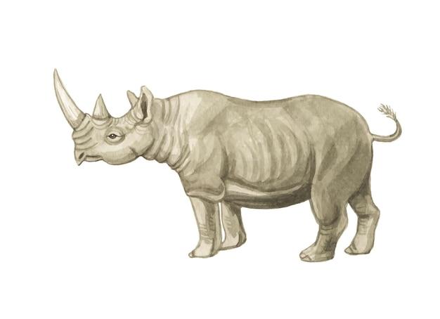 Illustration de rhinocéros aquarelle peinte à la main