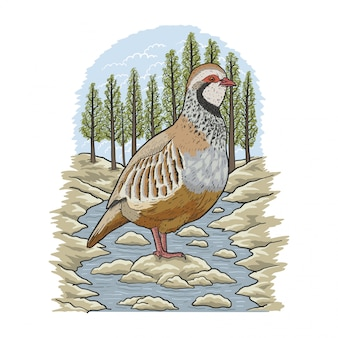 Illustration de la rivière partridge