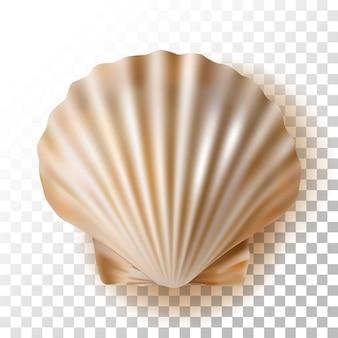 Illustration shell sur transparent