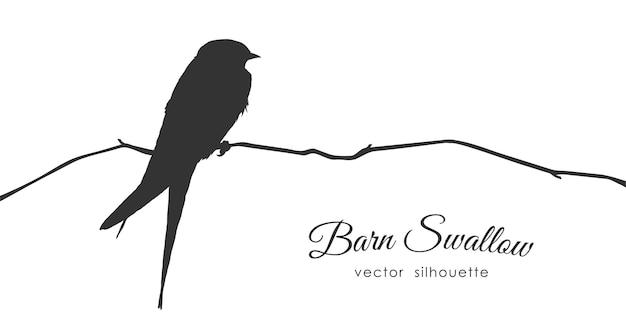 Illustration: silhouette d'hirondelle rustique assise sur une branche sèche.
