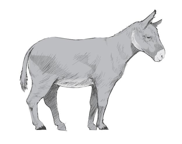 Illustration style de dessin de l'âne