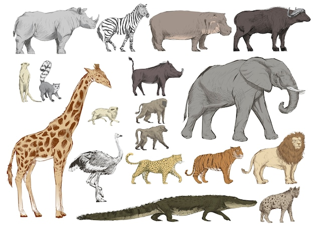 Illustration style de dessin de collection d'animaux