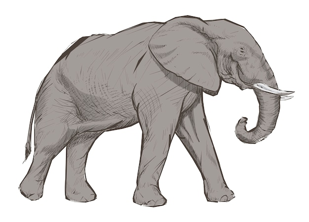 Illustration style de dessin d'éléphant