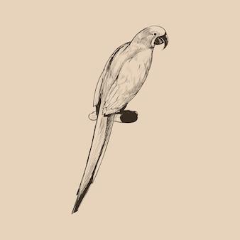 Illustration style de dessin de perroquet
