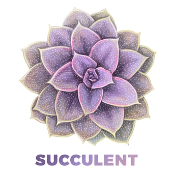 Illustration succulente de dessinés à la main réaliste