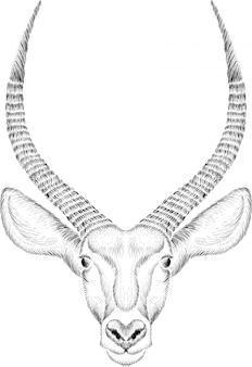 Illustration de tête d'antilope dessinée à la main