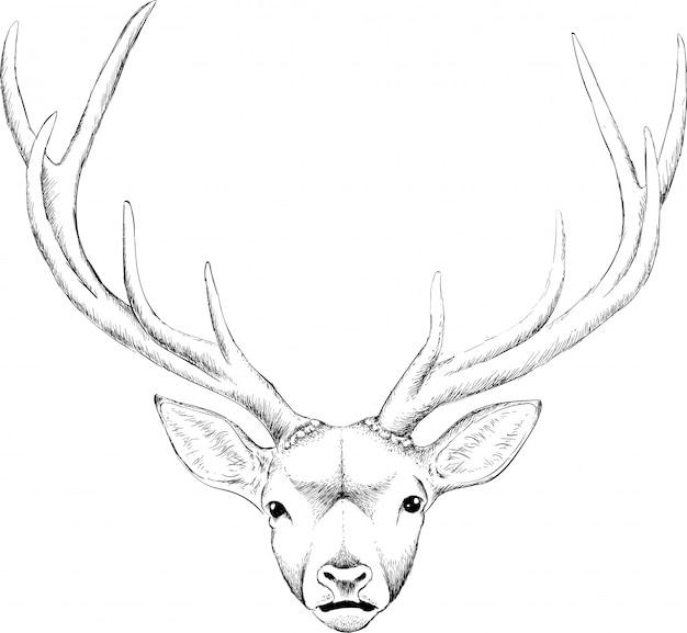 Illustration de tête chère dessinée à la main