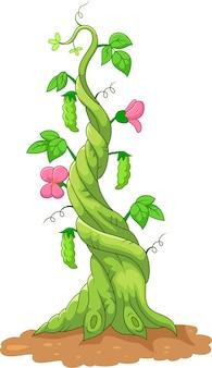 Illustration de la tige de haricot