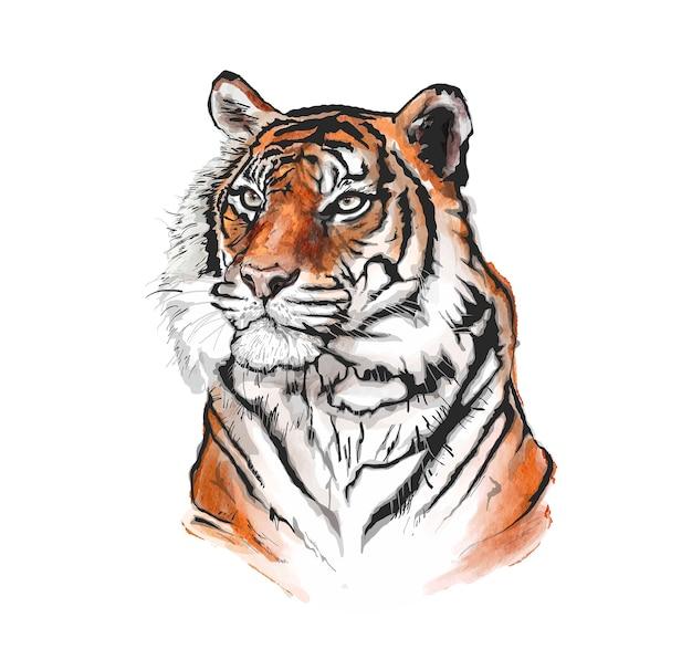Illustration de tigre