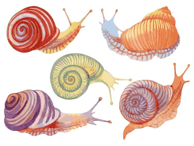 Illustration vectorielle avec aquarelle jeu d'escargots isolé sur blanc.