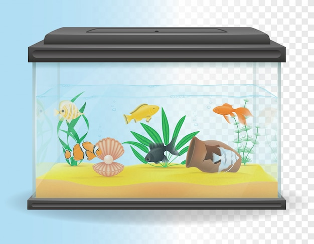 Illustration vectorielle aquarium transparent