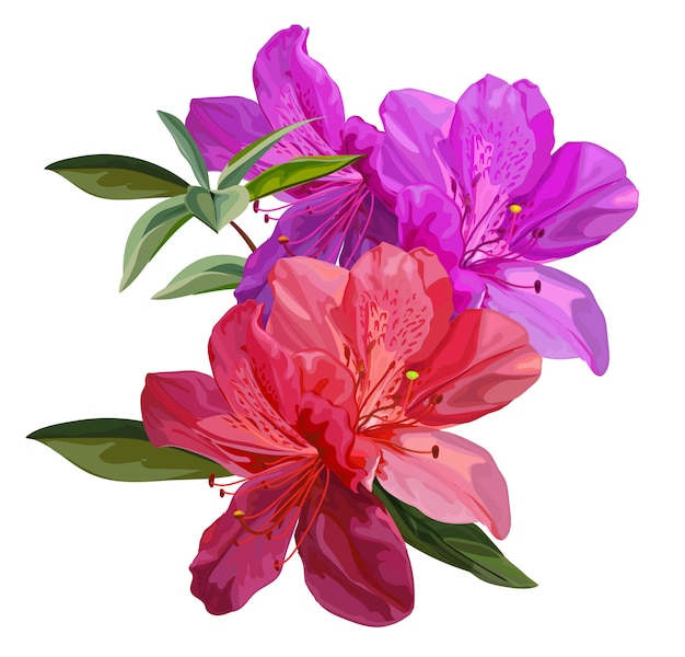Illustration vectorielle d'azalée fleur