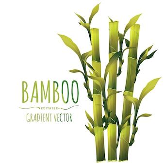 Illustration vectorielle de bambou
