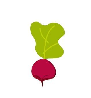 Illustration vectorielle de betterave pourpre cartoon style. concept de temps de récolte d'automne avec des légumes biologiques mûrs et frais. agriculture, éco, modèle de conception de marché alimentaire