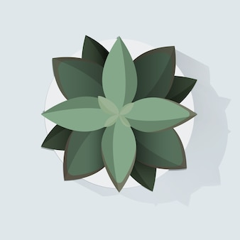 Illustration vectorielle de botanic houseplant decoration