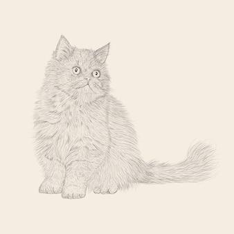 Illustration vectorielle de chat persan mignon dessiné à la main