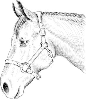 Illustration vectorielle de cheval