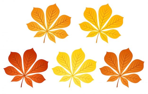 Illustration vectorielle de cinq feuilles de châtaignier d'automne de différentes couleurs isolés sur un blanc.