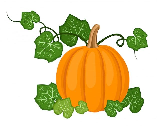 Illustration vectorielle de citrouille orange avec des feuilles isolées sur un blanc.