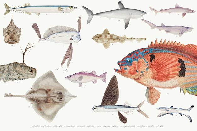 Illustration vectorielle colorée de la collection de dessin de poisson