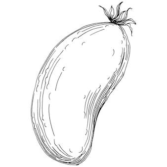 Illustration vectorielle de concombre légumes croquis. style gravé. produit sur le marché agricole. le mieux situé pour le menu de conception, l'étiquette, les badges, les bannières et la promotion.