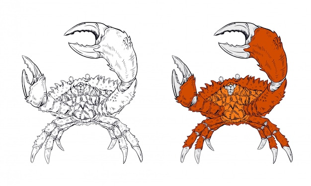 Illustration vectorielle de crabe