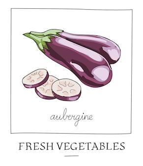 Illustration vectorielle dessinés à la main d'aubergine isolée