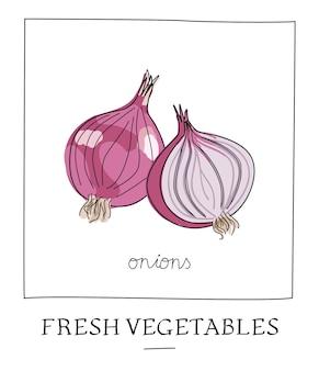 Illustration vectorielle dessinés à la main d'oignons isolés.