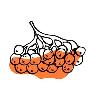 Illustration vectorielle de doodle plat sur un thème d'automne. branche de rowan avec des baies. décoration moderne.