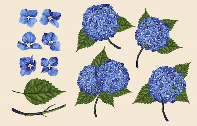 Illustration vectorielle entièrement modifiable d'ensembles de clipart floral.