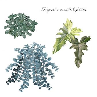 Illustration vectorielle de feuilles tropicales