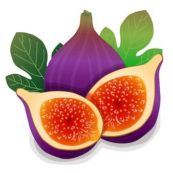 Illustration vectorielle de figue