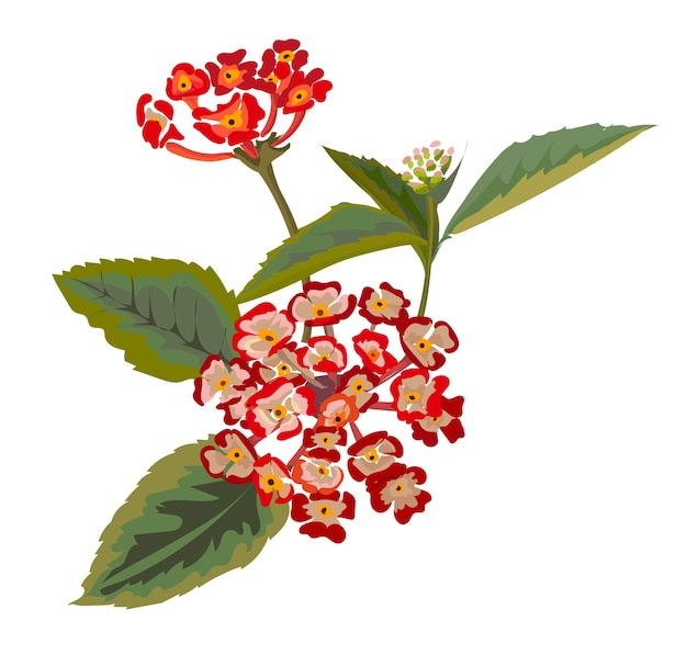 Illustration vectorielle de fleur avec lantana armata