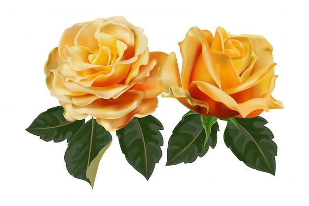 Illustration vectorielle fleur rose jaune réaliste