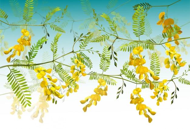 Illustration vectorielle de fleur de sesbania