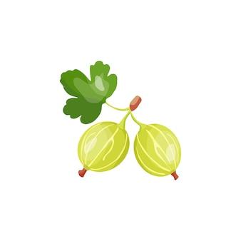 Illustration vectorielle de groseilles à maquereau baie très utile un entrepôt de vitamines