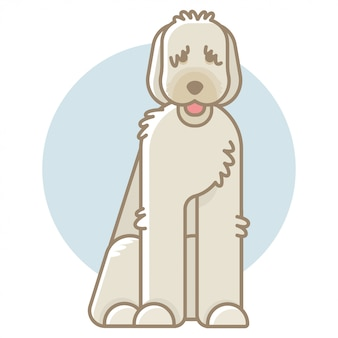 Illustration vectorielle de labradoodle